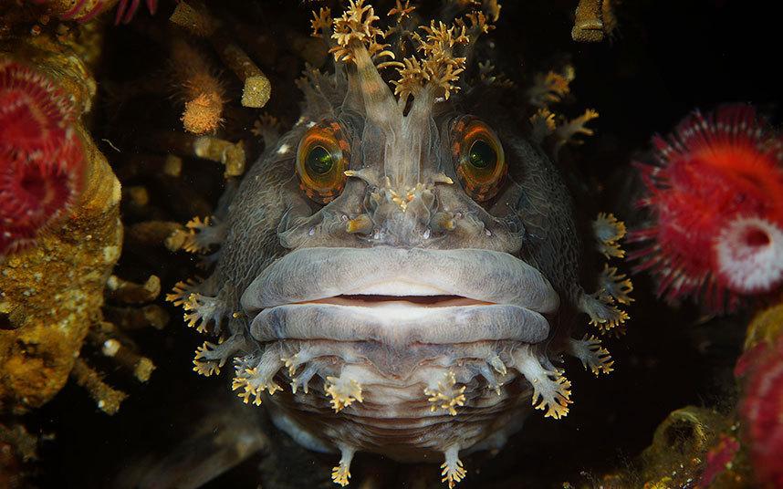 水中写真コンテスト 不思議な ...