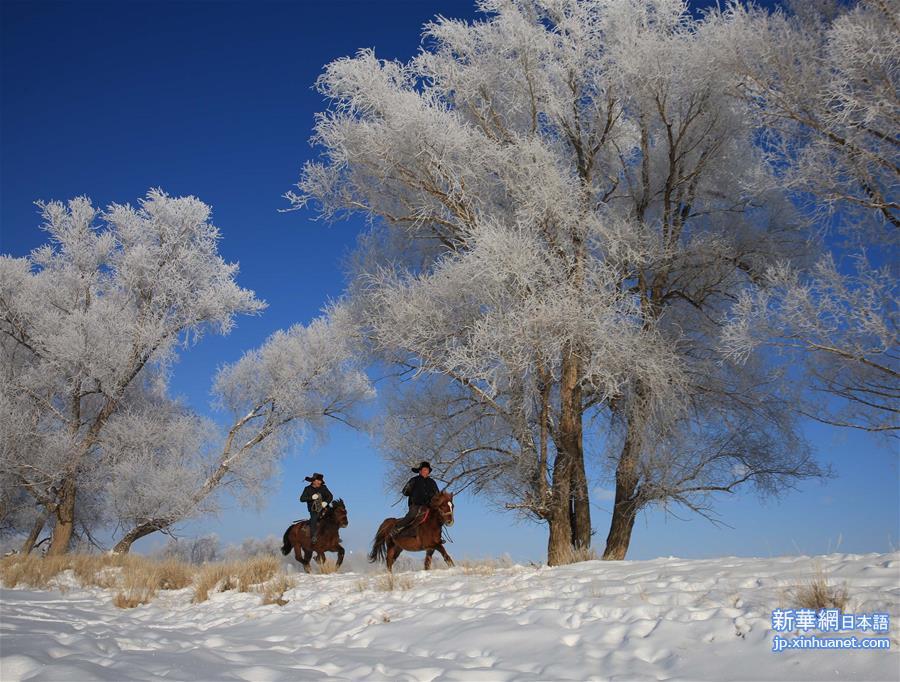 新疆のアルタイ市、樹氷美景が現...