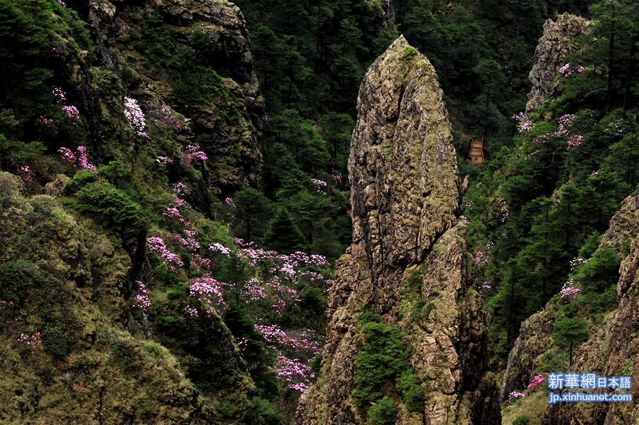 中国湖北省の神農架、世界遺産登録に成功