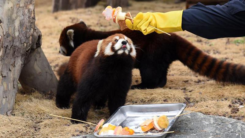 元宵節のごちそうを味わう動物たち 山東省済南市
